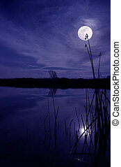 Moon And Reeds - Moon and Silhouette of Reeds Reflected in...
