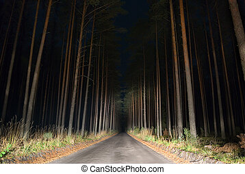 Weird road. - Night view of road in the forest lit by car...