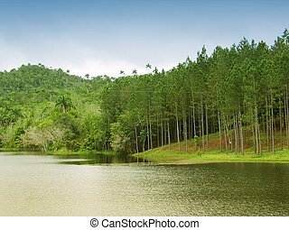 Beautiful lake landscape with pine trees forrest