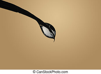 Waterdrop - this image shows a macro from a waterdrop with...