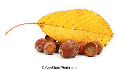 acorns and leaf
