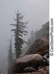 Dead Trees in Fog - Dead Winter Pine Tree In Heavy Mountain...