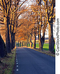 Tree avenue 3 - Tree avenue with old trees watching the road...