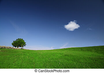 Green field with lone tree and white fluffy cloud on a clear...