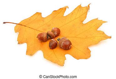 oak leaf and acorns