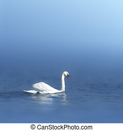 swan in a dream