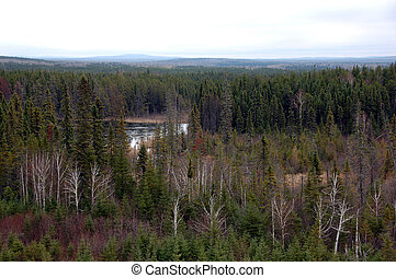 Northern Forest - Picture of a Northern Forest at the limit...