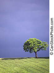 alone tree - landscape with tree and ill in a cloudly day