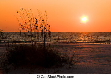 Sea Oat Sunset - Sunset over Florida Gulf Coast beach with...