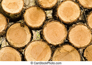 Woodpile - The cut ends of logs on a woodpile