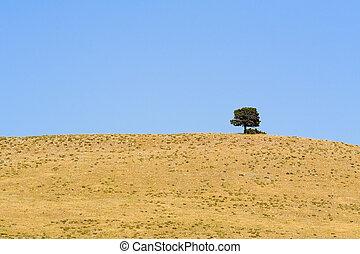 Lone Tree - One lone tree on a hill in a barron field in...