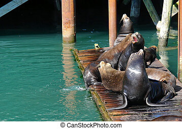 barbershop quartet - group of sea lions sitting on pier on...