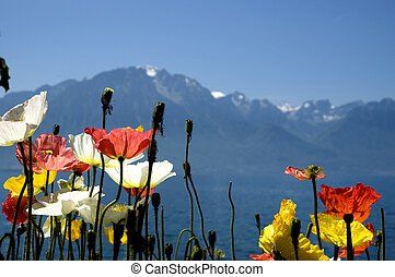 Switzerland Alps - Lake Geneva in Switzerland