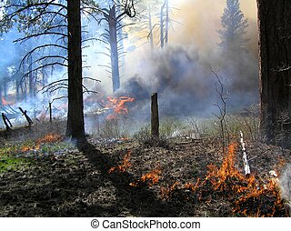 Burning Heavy - Large log smoking during a forest burn.