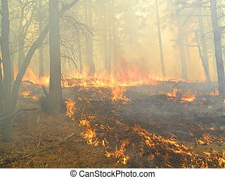 Heavy Smoke - Thick smoke in a burning pine forest