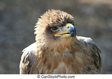 Talking Tawny Eagle - This Eagle seemed to want to have a...