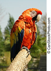 Parrot - A Colorful MacawParrot on a Branch