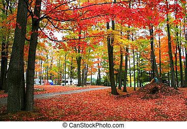 otoño, rojo