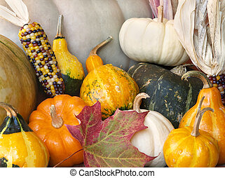 fall squash gourds