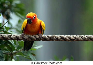Parrot - A nice colorful parrot sitting on a rope.