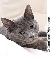 cute gray cat - cute cat relaxing on a sofa