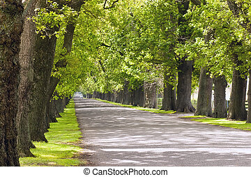 Oak Avenue 02 - An oak lined road in Hastings, Hawke\\\'s...