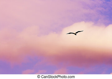 Flying seagull - Seagull flying at the sunset sky