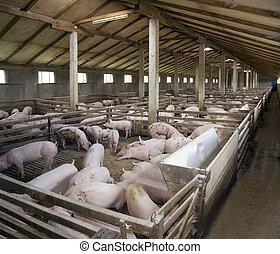 PigFarm - Small pig farm