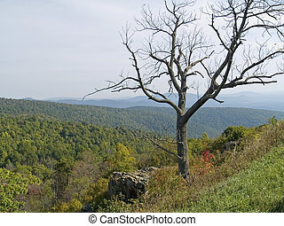 Tree Top Shenandoah - A shapely dead tree frames the scenic...