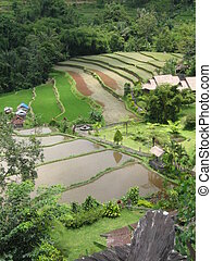 bali rice fields - aerial shot of vast agricultural land in...