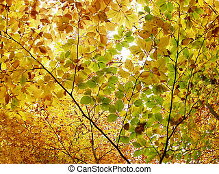 autumn leaves - Yellow and orange autumn leaves in the...