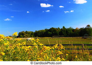 Rural landscape - Rural summer landscape with blooming...