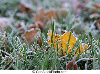 Hoar-frost on a fallen leaf