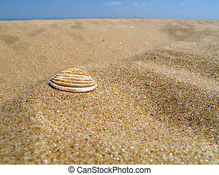 Sea Shell - A sea shell on a beach