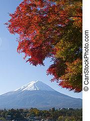 Fall Colors X
