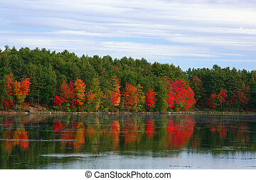 Fall foliage - Maine\\\\\\\'s fall foliage reflecting in...