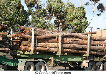 Logs on semi truck