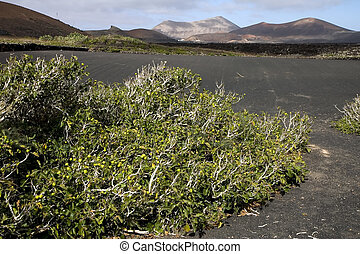 Volcanic land in Lanzarote