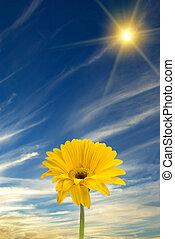 Daisy, sun, and blue sky