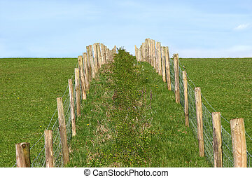 Rural Fencing - Wooden and wire double fence in a field at...