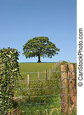Rural Vista - Wood and wire fencing with an oak tree in...