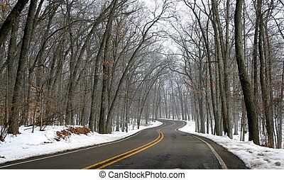 Winter Drive Way - Winding country road through tall trees...