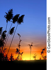 Sun Set - Tall grass and sun set with colorful sky