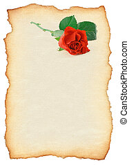 scroll with rose motif isolated on pure white background,...