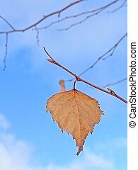 Last leaf - last yellow birchen leaf against blue sky