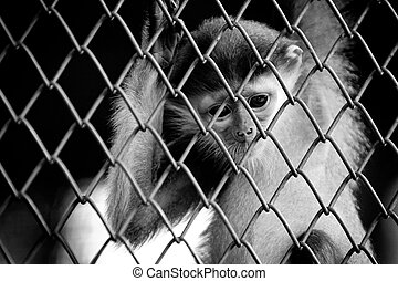 Sad little monkey
