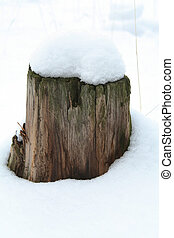 stump - smal stump straw on the snow