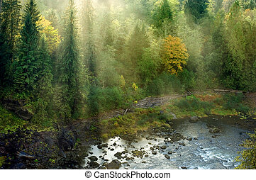 Northwestern landscape - Evergreen forest in sun rays in...