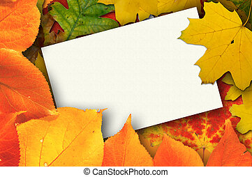 Blank card with leaves - Blank card surrounded by beautiful...