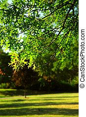 綠色, 樹, 分支